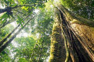 Series Netflix. Foto do site da O TV Foco que mostra À la Supermax? Netflix fará série de suspense na Floresta Amazônica