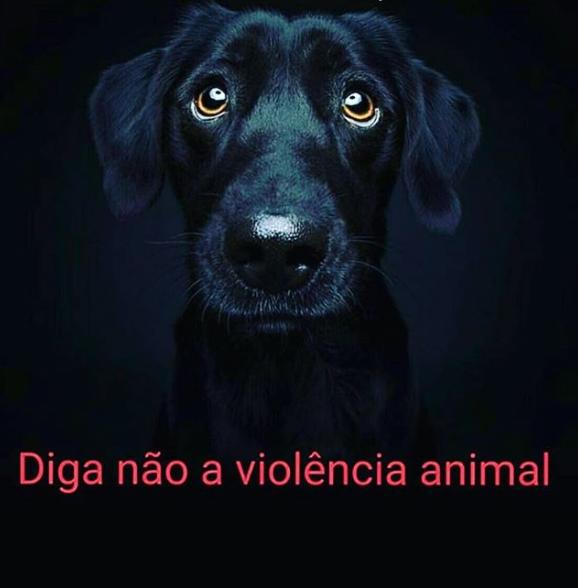 Fabíola Reipert pede pelo fim da violência contra os animais. (Foto: Reprodução)