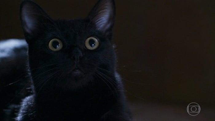 O gato León em O Sétimo Guardião (Foto: Reprodução/Globo)
