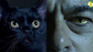 O gato León é praticamente um protagonista de O Sétimo Guardião