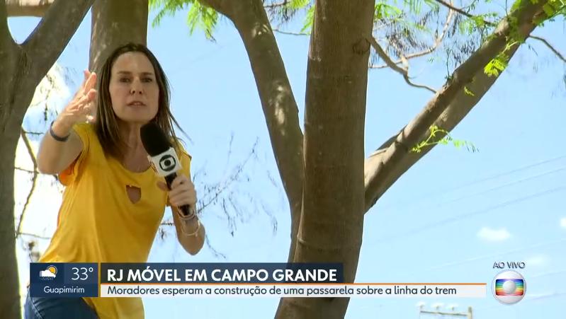A repórter Susana Naspolini em cima de árvore ao vivo no RJ1 (Foto: Reprodução/Globo)