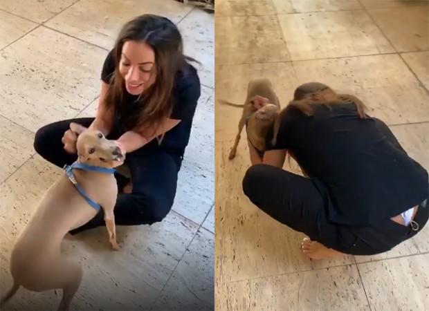 Anitta: encontro com cãozinho (Foto: Reprodução Instagram)