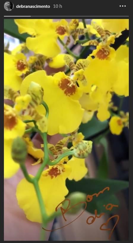 """Débora Nascimento dá """"bom dia"""" com foto de orquídeas Foto: reprodução/ instagram"""
