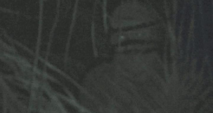 ET Bilu ganhou destaque em alguns programas na TV. (Foto: Reprodução)