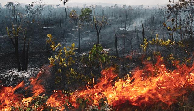 Queimadas na Amazônia (Foto: Reprodução)