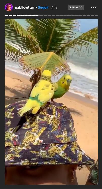Pabllo Vittar aparece com periquitos durante férias em Trancoso. Foto: Reprodução/Instagram