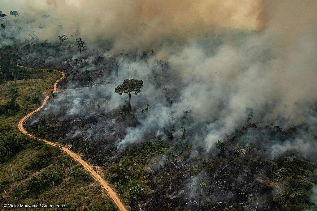 Bolsonaro acusa Leonardo DiCaprio de queimadas na Amazônia (Foto: Reprodução)
