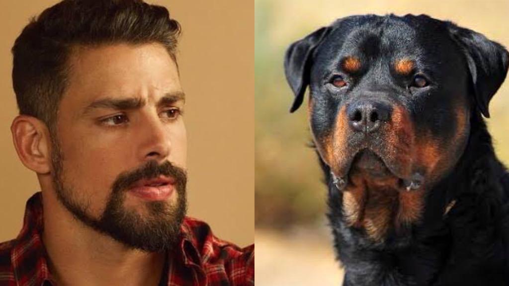 Cauã Reymond é flagrado junto com seu cão, Romeu (Montagem: TV Foco)