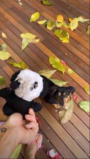 Nos Stories, Giovanna Ewbank compartilhando momento em que sua cachorrinha destrói objeto de valor (Foto: Reprodução)