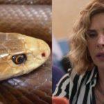 Bom Sucesso, Eugênia é picada por uma cobra no final da novela (Montagem: TV Foco)