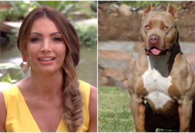 Patrícia Poeta foi acusada de reforçar o preconceito que existe contra os cães da raça pitbull (Foto: Reprodução)