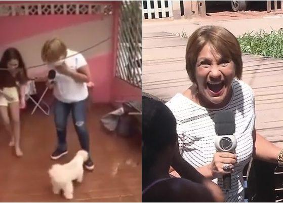 Repórter Celia Pinho tomou susto com cachorro ao vivo. (Foto: Montagem/Reprodução)