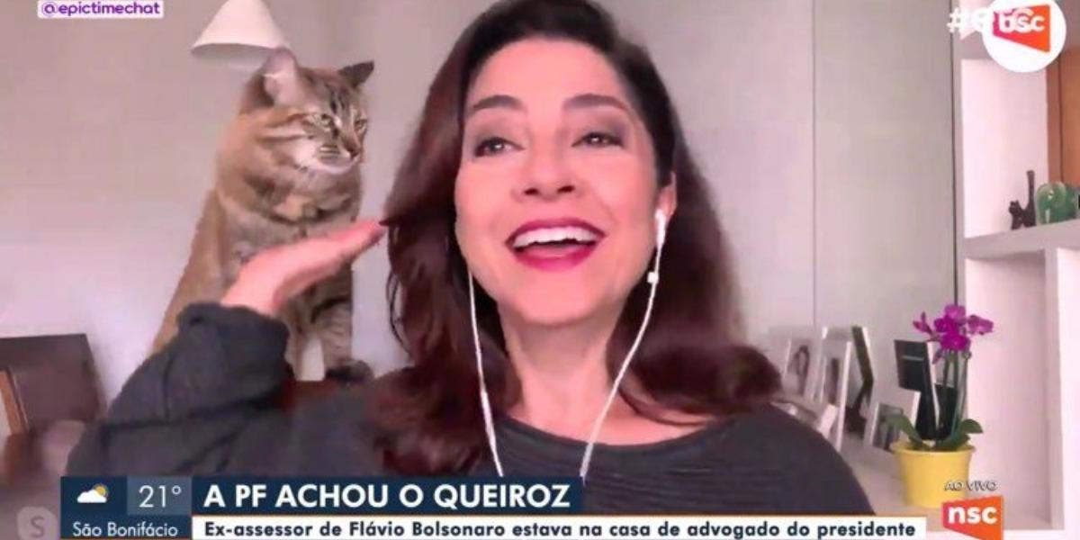 Carolina Bahia, jornalista da NSC, filial da Bahia, foi interrompida por sua gata, Kitty, ao vivo (Imagem: Globo)