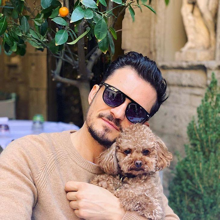Orlando Bloom e seu cachorro de estimação (Foto: Reprodução)