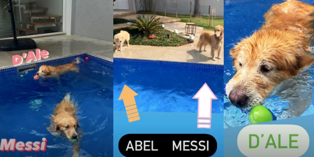 Apresentadora mostra seus cachorros nas redes sociais (Foto: Montagem)