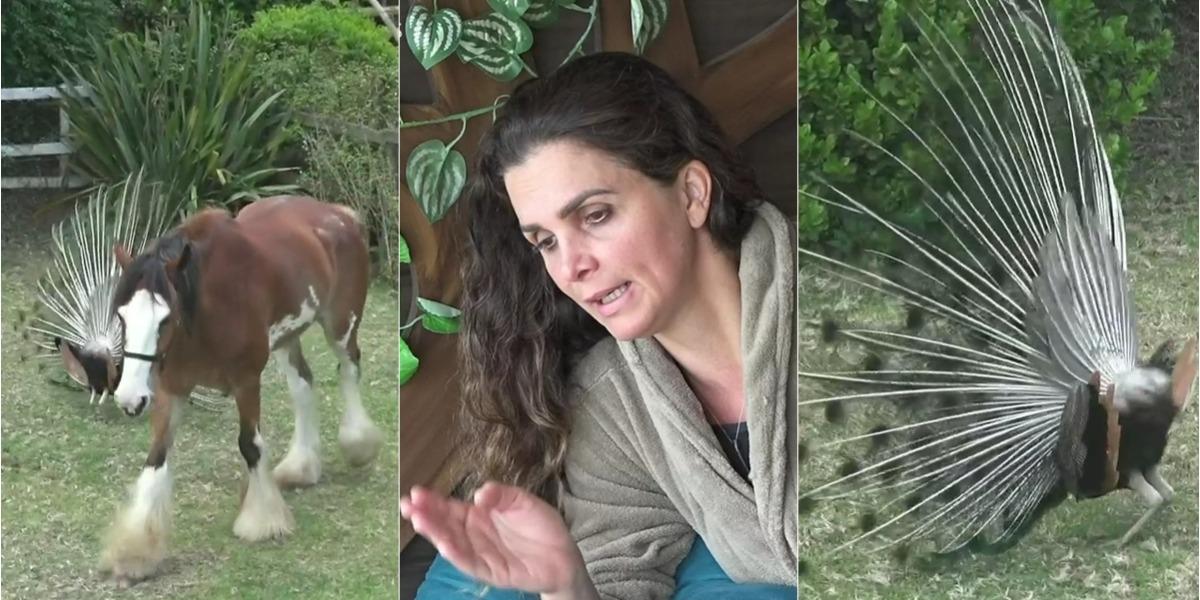 Luiza Ambiel briga com o cavalo Lyon e com pavão (Foto: Reprodução)