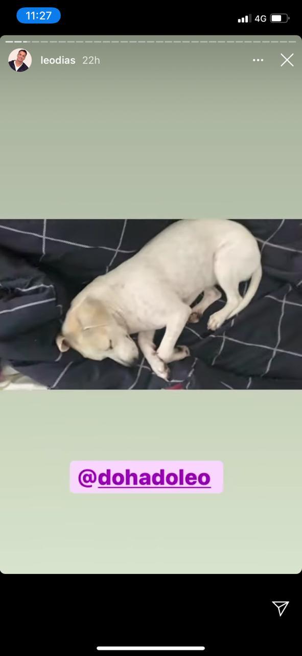 Apresentador aparece relaxando ao lado de cachorrinha na cama (Reprodução: Instagra)