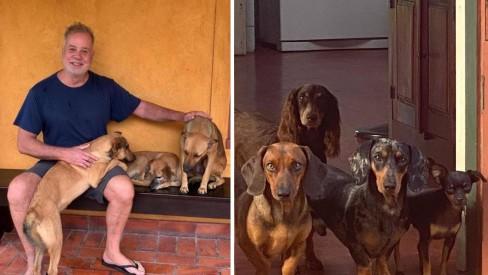 Fotos de casão luxuoso com 16 cachorros: Luiz Fernando Guimarães mostra casa, após se assumir gay